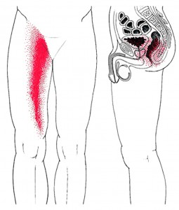 Smerteområde for Adduktor magnus