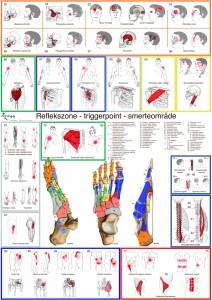 Reflexology chart poster,zoneterapi plakat,triggerpoint,dorsal,lateral,medial
